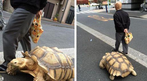tortoise-123_zpsqobgj8gx