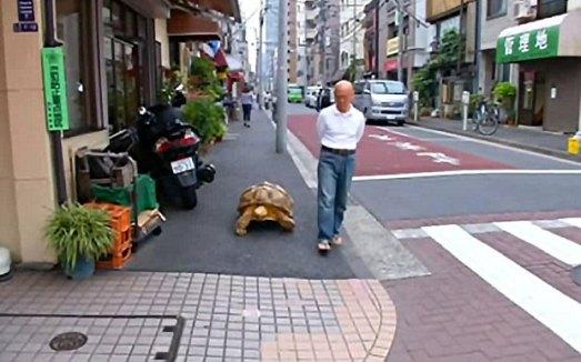 tortoise-walk_3345649b_zpsvcokj93p